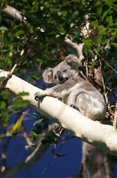 Experience the local wildlife with Byron Bay Wildlife Tours