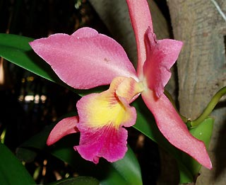 Find beautiful orchids flowering in our gardens