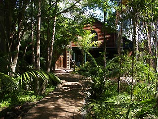 A lush oasis amongst palm trees - that is PLANULA