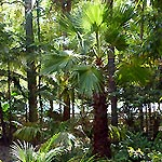 Lush tropical palms in the PLANULA gardens