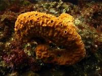 Sponge in orange